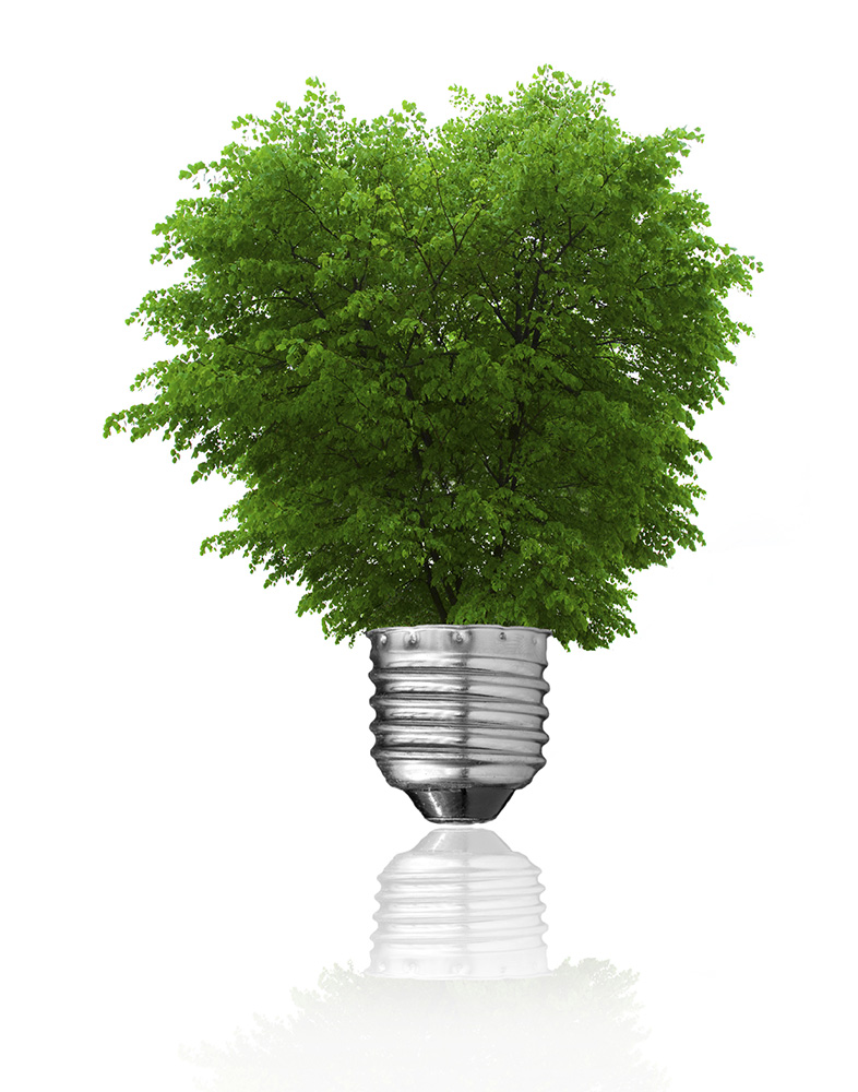 Light bulb and green tree growing from it isolated on white. Renewable energy and ecology concept